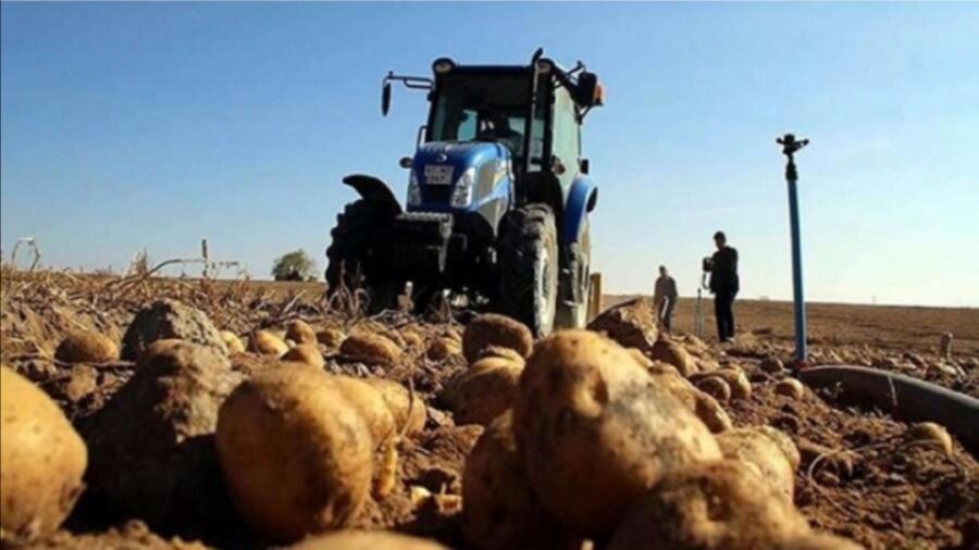 بعد النعناع..إتلاف 136 طنا من البطاطس وإحالة ملفات شخصين معنيين على القضاء