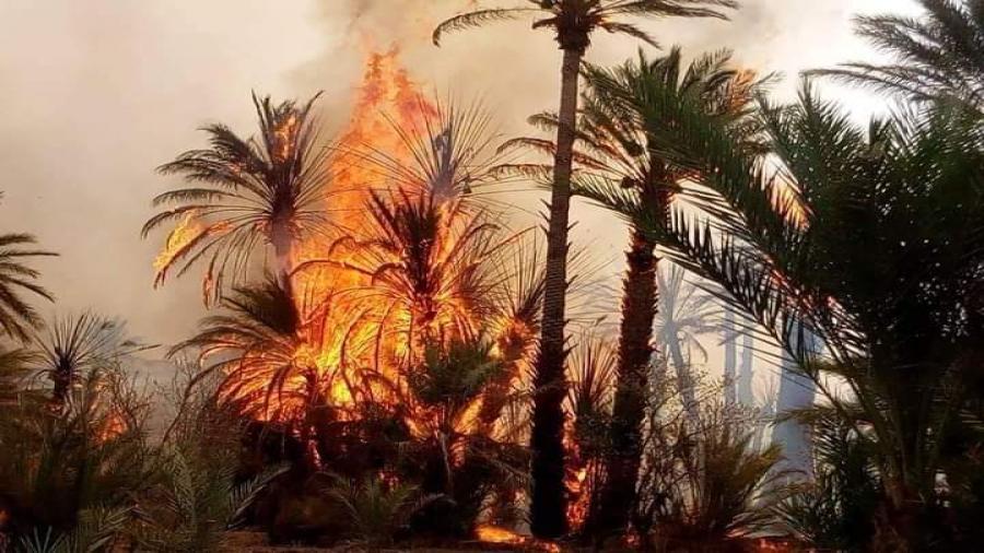 زاكورة..بالفيديو حريق كبير بواحة أيت عبد الله جماعة أفرا