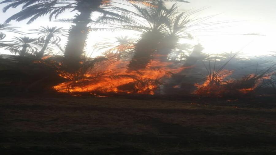 زاكورة..حريق باحد الحقول